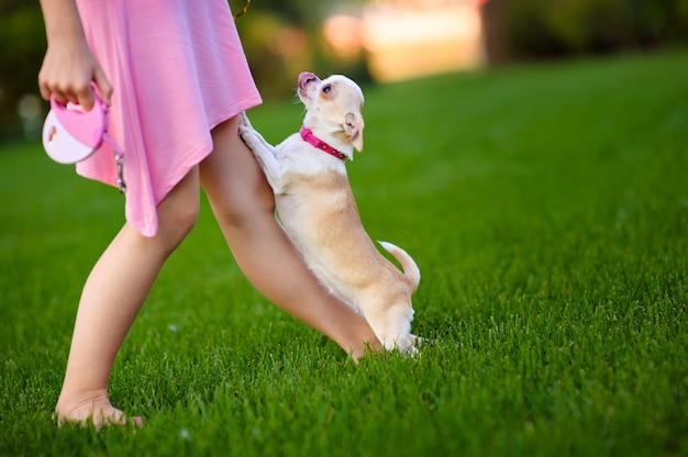 小さな犬と一緒に歩いているピンクのサンドレスの女性