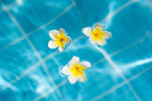 青い水の背景にフランジパニの花