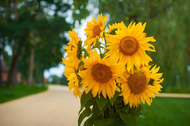 黄色いヒマワリの花束