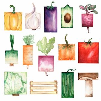 長方形の野菜のコレクションを描いた水彩画