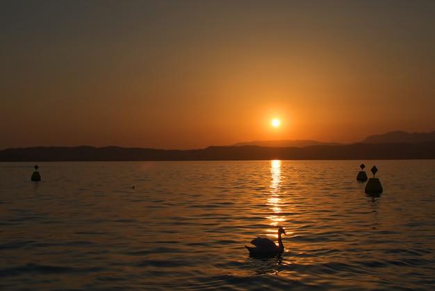 ガルダ湖に沈む夕日の光線で白鳥シルエット