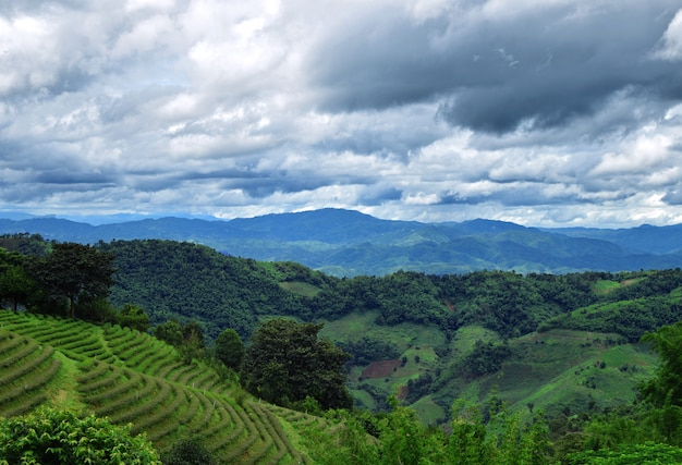 Чайная плантация и горы в дой мае салонг, чианг рай, таиланд