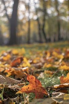 Концепция одиночества - осень осень кленовый лист селективный фокус