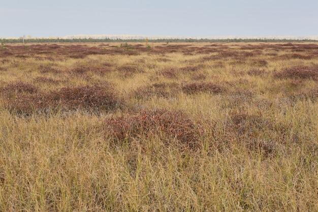 沼で秋の茶色のフィールド