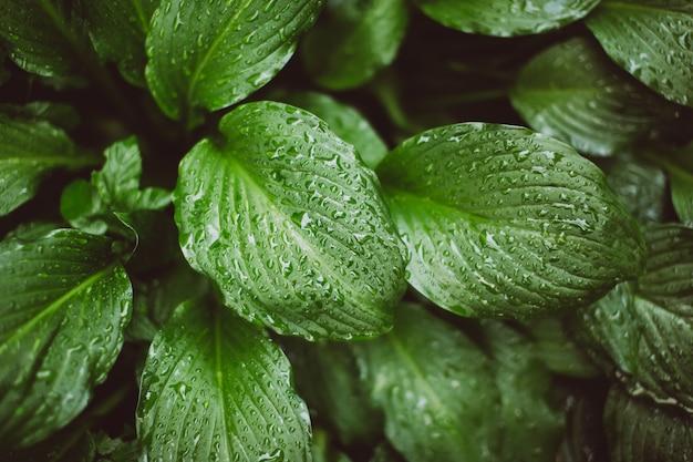 雨上がりの濡れた葉