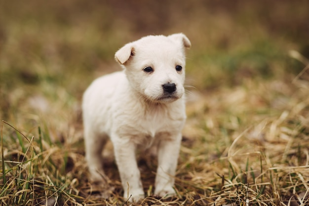 マスターの屋外を待つ若い子犬