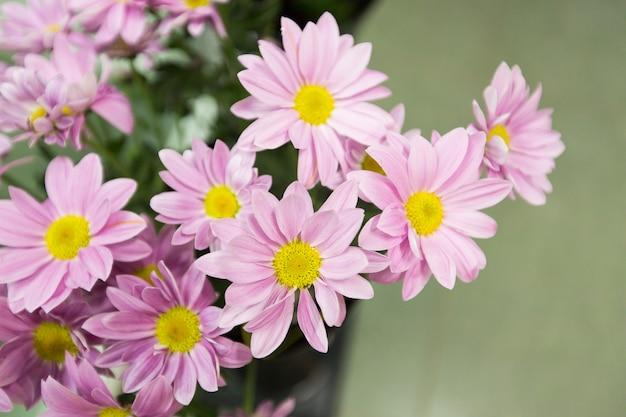 春のピンクの花