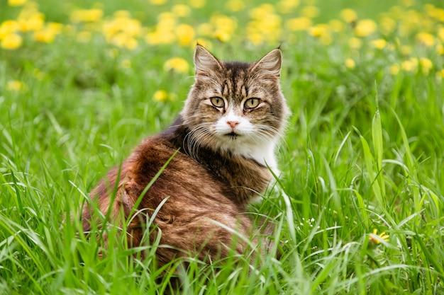 芝生に座っておびえた猫の肖像画