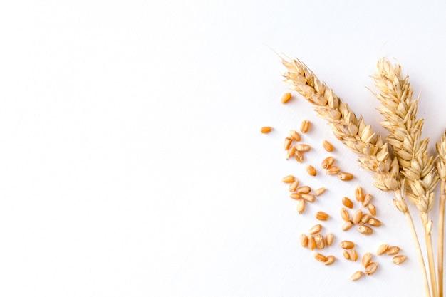 Золотая спелая пшеница на белом фоне