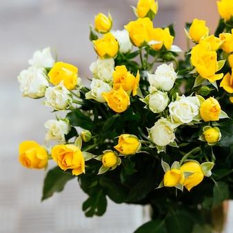柔らかい色のバラの背景