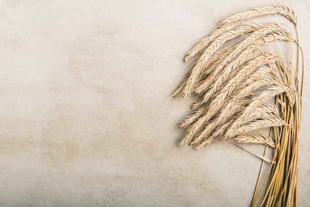 灰色の素朴な背景に熟した小麦