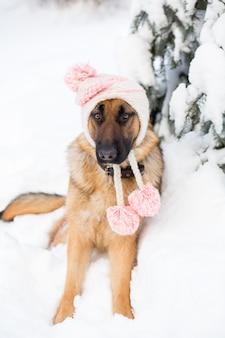 冬の帽子をかぶっているジャーマン・シェパード犬