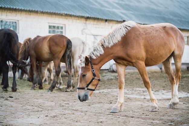 馬の農場のシーン