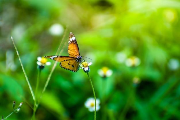 花と朝の日差しを蝶します。