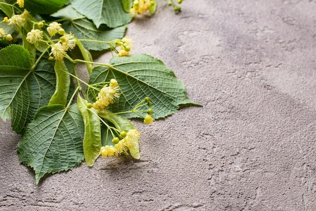 菩提樹の花と葉