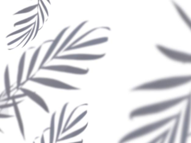 熱帯のヤシの葉の影