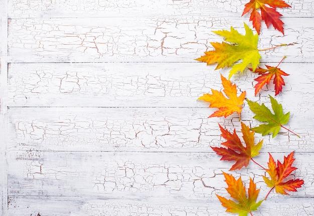 カエデの葉と秋の背景