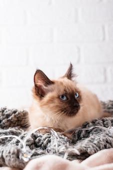 Маленький забавный котенок на вязаном пледе