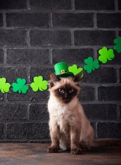 Забавный кот в зеленой шляпе гном