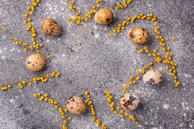 Перепелиные яйца и цветы мимозы