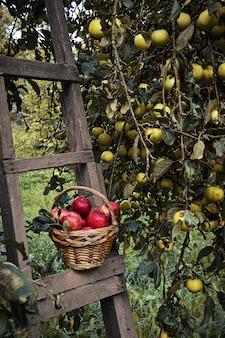 赤い熟したリンゴのバスケット
