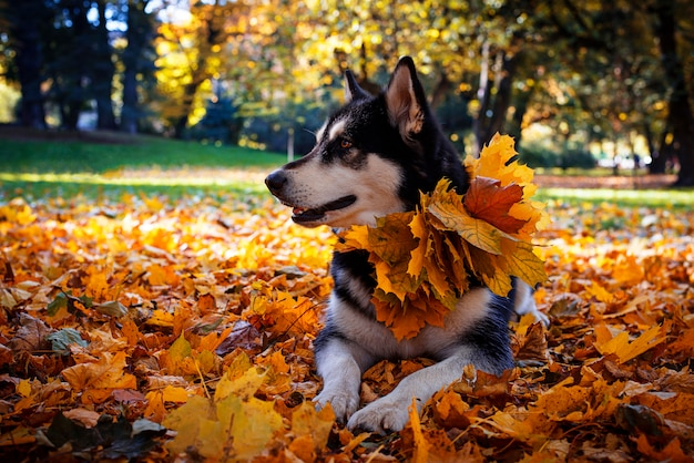秋の公園で葉を持つかわいい犬