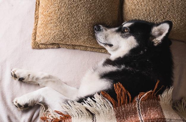 格子縞の下のベッドで寝ているかわいい犬
