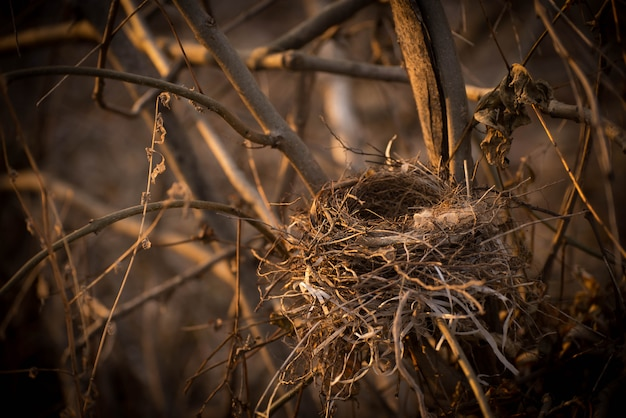 木のクローズアップの枝に空の鳥の巣。