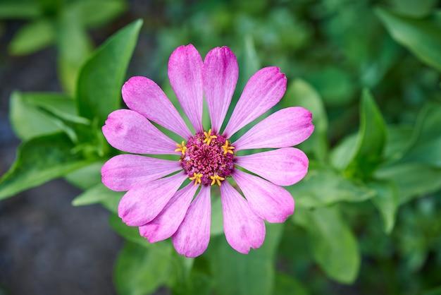 咲く花のクローズアップ