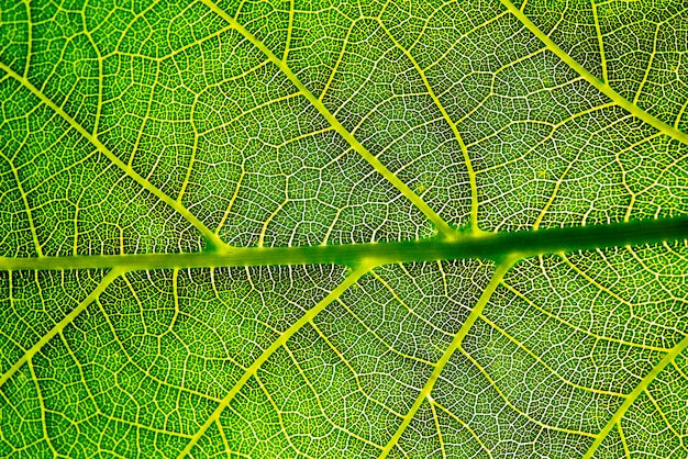 緑の葉の背景テクスチャ。