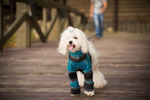 散歩に暖かい服装で幸せな犬。
