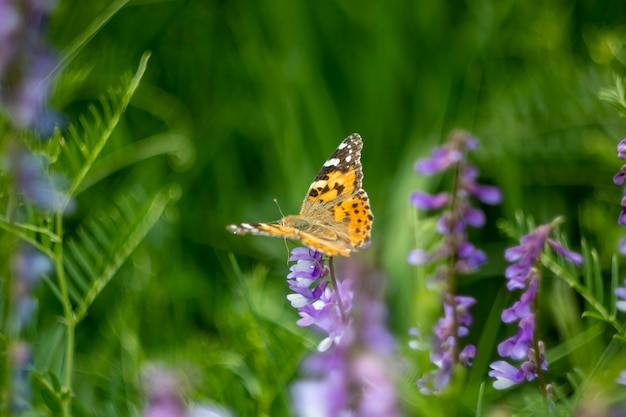 Желтая бабочка на весеннем цветке