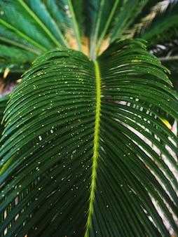 熱帯のジャングルのヤシの葉、濃い緑色のトーン