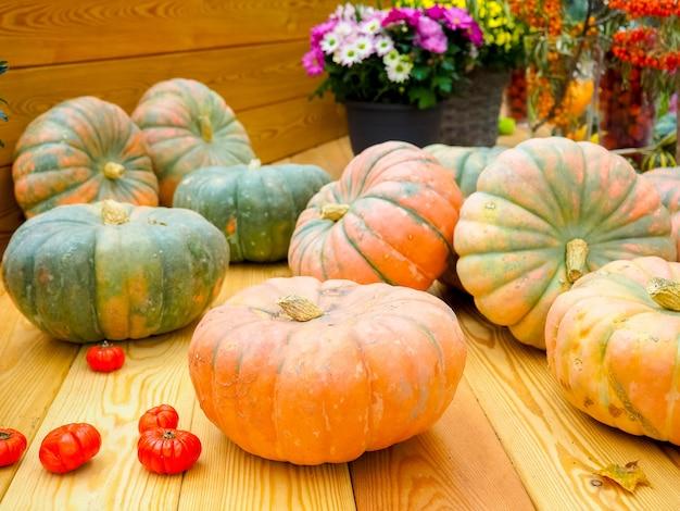 木製のカボチャの多様な品揃え。秋の収穫。