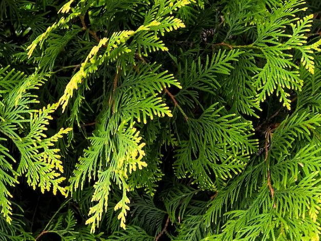 フルフレーム多数の緑の葉