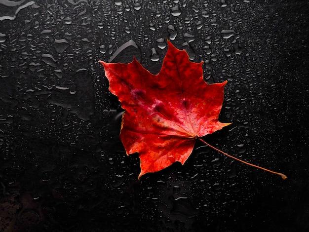 Осенний красный лист с каплями дождя