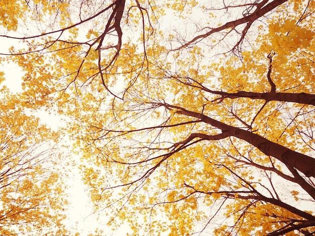 Осенние ветки деревьев, вид снизу, красивый фон для открытки, концепция осени и комфорта
