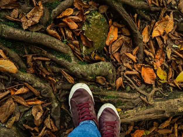 Крупным планом ноги, прогулки в лесу, ноги на лесной тропе в осенние листья и корни, поднимаясь
