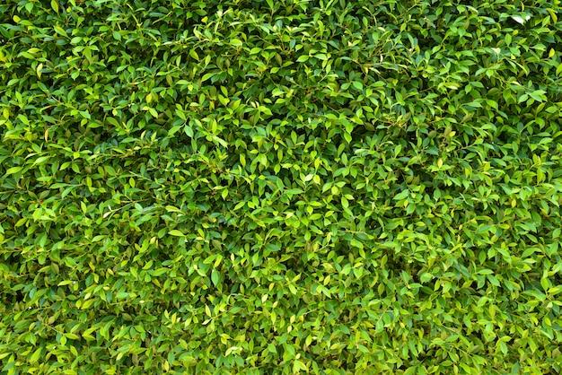 緑の植物はテクスチャ背景を残します。