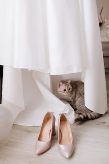 かわいい猫が花嫁のドレスを隠し、花嫁のかかとの近くに立つ
