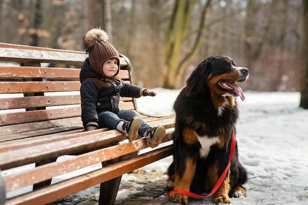 魅力的な小さな男の子がベルンマウンテンドッグとベンチに座っている