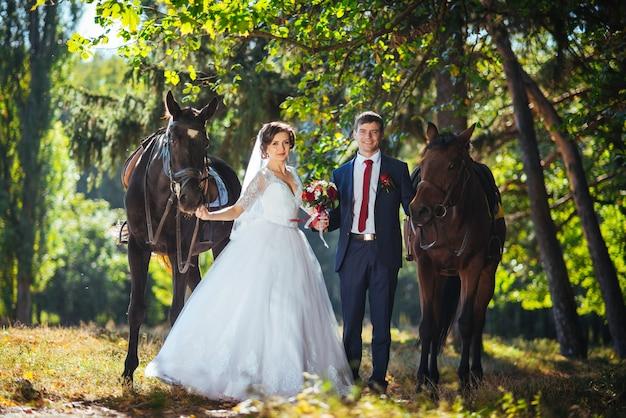 結婚式の馬と自然の散歩