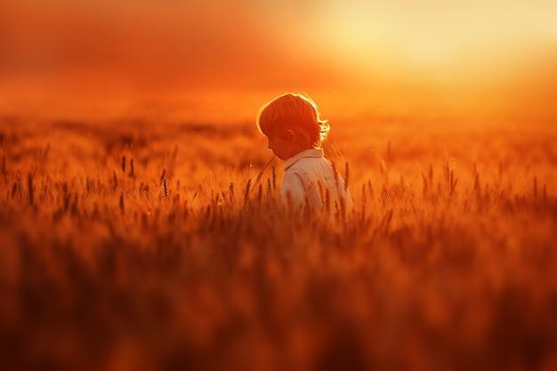 小さな男の子は金色の小麦でいっぱいの野原を歩く