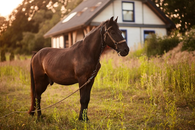 茶色の馬は、家の前に緑の草の上に立つ