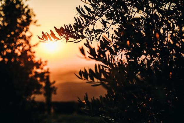 太陽はイタリアのトスカーナの畑を沈む