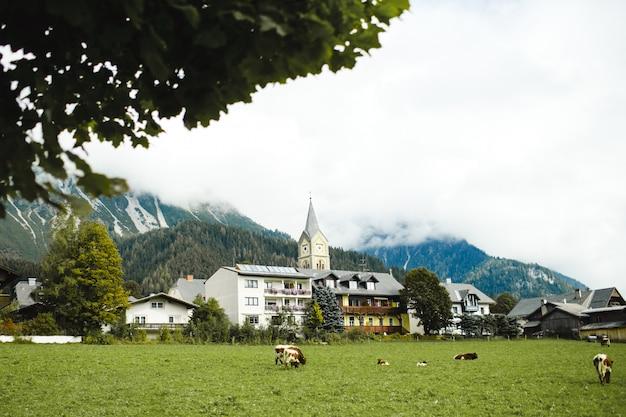 Поле с коровами в маленьком городке в аплсе