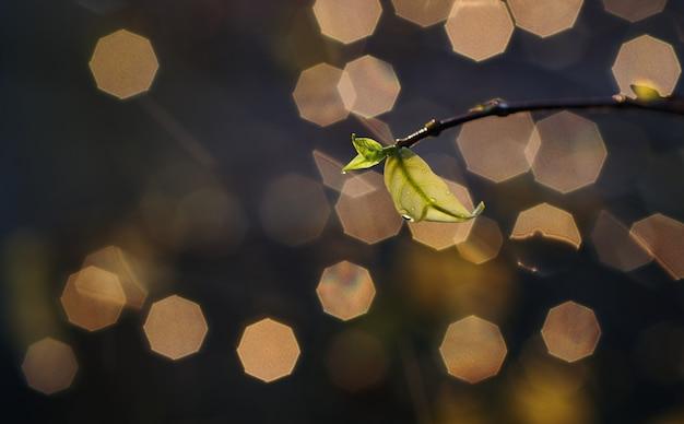 雨と梅雨の滴と緑の葉