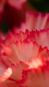 赤い花びらのクローズアップ