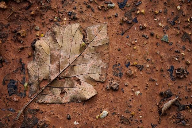 葉が砂の上で分解する