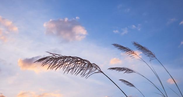 風の強い日の曇り空と草します。